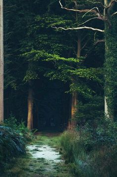 I love to imagine that there lives trolls and fairies in the woods