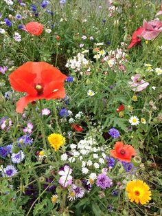 Idea Of Making Plant Pots At Home // Flower Pots From Cement Marbles // Home Decoration Ideas – Top Soop Wild Flowers, Beautiful Flowers, Meadow Flowers, Grandmas Garden, Veg Garden, Beautiful Gardens, Flower Pots, Wedding Flowers, Gardening