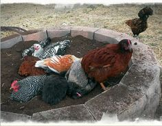 6 Awesome DIY Dust Bath Ideas For Your Chickens - puntoprecisoapp Portable Chicken Coop, Best Chicken Coop, Building A Chicken Coop, Chicken Runs, Chicken Coops, Chicken Nuggets, Dust Bath For Chickens, Urban Chickens, Pet Chickens