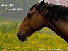 Idő multán (Jorge Louis Borges) Chris Spheeris – EROS(Rain)> Rain, Horses, Animals, Rain Fall, Animales, Animaux, Animal, Waterfall, Animais
