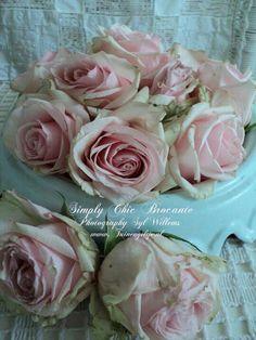 Shabby roses ♡