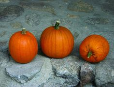 Germ 7-10 days Heirloom pre-1860 The ultimate pie pumpkin, although the larger…