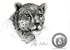 Art and Conservation Journal: Panthera onca. Jaguar, pencil drawing