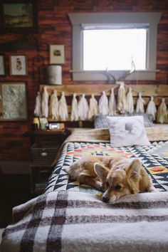 Cabin life I'll take the cabin, the quilt & the corgi! Dog Photoshoot, Urban Outfitters, Decoration Inspiration, Writing Inspiration, Cabins In The Woods, Home Bedroom, Bedrooms, Home Goods, Sweet Home