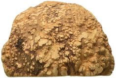 Himalayan Corporation Ruff Roots Stump >>> Be sure to check out this awesome product.