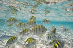 Cayo Arena Dominican Republic - República Dominicana- The waters are so crystal clear, you can enjoy the marine life from its surface.