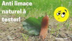anti limace naturel