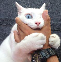 恐怖のホラー体験猫さんの怪物化