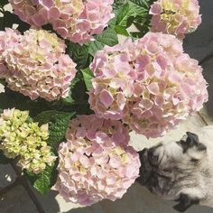 Pottering outside in the sunshine for an hour this morning and it's not just me who's in love with our new blooms  if he pees on them they'll be trouble!!