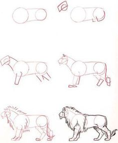 Image result for animal drawing tutorials