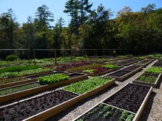 Madison's Organic Kitchen Garden in NC ... wow!  my kind of design