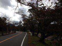 北条氏居住跡周辺  桜並木になっていて、春はお花見をする方で賑わいます。