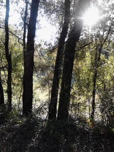 Citrus Springs Rails to Trails trail.