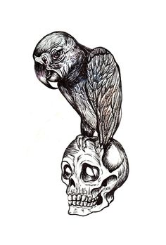 By Daniela Roessler - www.danielaroessler.com #illustration