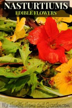 Yes, nasturtiums are flowers that are edible. Nasturtiums in Ice cubes? Just imagine these floral ice cubes floating in a beverage dispenser. Garden Tips, Home And Garden, Ice Cube Melting, Fish Ponds, Baking Supplies, Edible Flowers, Growing Flowers, Diy On A Budget, Pansies