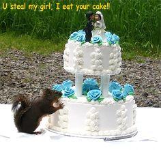 animal humor   Animal Humor squirrel funny