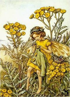 The Tansy Fairy. Vintage flower fairy art by Cicely Mary Barker. Taken from 'Flower Fairies of the Wayside'. Click through to the link to see the accompanying poem. Cicely Mary Barker, Flower Fairies Books, Fairy Paintings, Vintage Fairies, Beautiful Fairies, Fantasy Illustration, Fairy Art, Faeries, Illustrators