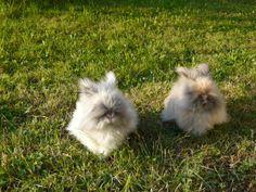 Pitchoune et Gribouille, mes deux petites lapines