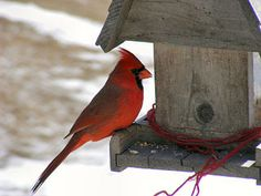 What to Do About Bird Feeders While You're Away on http://www.hortmag.com