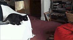 Dieser Möchtegern-Olympionik. | 18 Katzen, die genauso überrascht sind wie Du