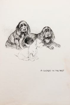 Cocker Spaniels & Terrier with Greyhound  or Lurcher to Reverse. Vintage Black and White Pencil Sketch or Monochrome Print by K. F. Barker by PaperPopinjay on Etsy https://www.etsy.com/listing/218882796/cocker-spaniels-terrier-with-greyhound