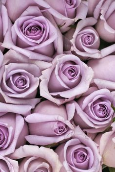 There's a type of rose for everyone in your life! But the red rose meaning, white rose meaning, yellow rose meaning, and black rose meaning are all very different. Here are all the rose color meanings you need to know. Purple Roses Wallpaper, Flower Wallpaper, Violet Aesthetic, Flower Aesthetic, Black Rose Meaning, Rose Color Meanings, Coral Roses, Black Roses, Every Rose