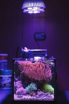 33 Aquarium with Beautiful Coral Reef - meowlogy Small Saltwater Tank, Saltwater Aquarium, Aquarium Fish Tank, Marine Fish Tanks, Marine Tank, Coral Reef Aquarium, Marine Aquarium, Nano Reef Tank, Reef Tanks