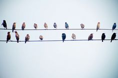 Like  bird on a wire  Like a drunk in a midnight choir  I have tried in my way to be free - Leonard Cohen-great lyrics