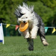 disc dog bologna