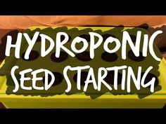 A Simple Guide to Starting Seeds for Hydroponics