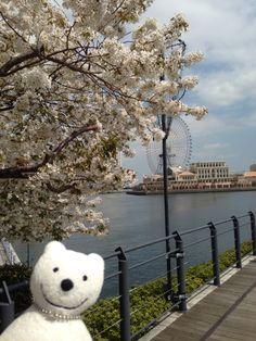 クマ散歩:大岡川を品行方正なクマが上る (新港) The Bear took a walk up the Ooka River!♪☆(^O^)/