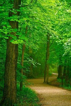 I love to walk in woods. as peaceful as this!