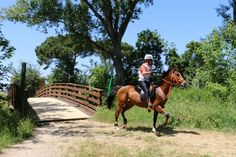 Stand 4 Horses, Lifestyle, Animals, Animales, Animaux, Horse, Words, Animal, Animais
