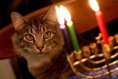 Second night of Hanukkah...