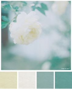 Blues and creams color palette