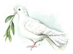 Image result for olive branch and dove painting