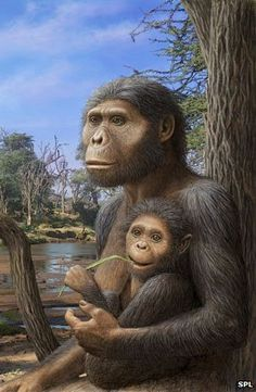Human ancestors' diet changed 3.5 million years ago - bbc --- by looking at teeth scientist can determine that 3.5 million years ago hominins started eating grasses and animals in addition to their typical forest diet