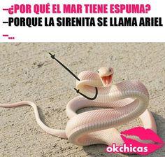 Que mal chiste 😂😒 Spanish Jokes, Funny Spanish Memes, Funny Jokes, Best Memes Ever, Pinterest Memes, New Memes, Funny Animal Pictures, Animal Memes, Tutorial
