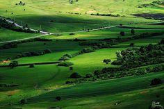 Golf Courses, Nature, Naturaleza, Nature Illustration, Off Grid, Natural