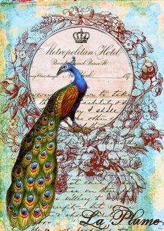La Plume Vintage Collage Background ~ Antique Prints Passion