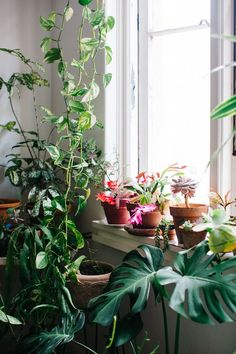 all the indoor garden plants Indoor Garden, Garden Plants, Home And Garden, Deco Jungle, Belle Plante, Deco Nature, Decoration Plante, Pot Plante, Plants Are Friends
