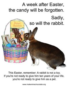 #Easter, #TriangleVRH, #bunnies, #rabbits