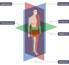 Bbc Bitesize Gcse Physical Education Movementysis Wjec Revision 2