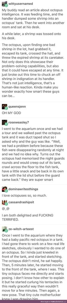 Octopi being smartasses