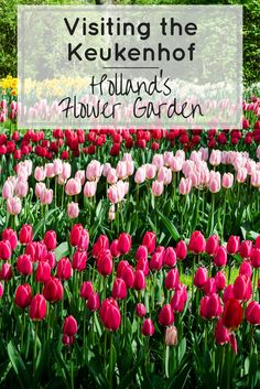 Day trip to Keukenhof from Amsterdam - The Garden of Europe