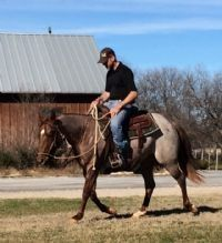 Kats Bet - 2013 Red Roan Mare    Sire: Metallic Cat   Dam: Bet Yer Blue Boons NCHA LTE: $332,959 Contact us for price