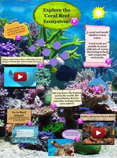 A coral reef needs shallow warm water. Coral reefs are usually in areas with lots of  waves that bring in food and oxygen the reef needs. #Glogster #CoralReef