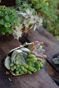 succulent coin purse