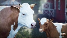 #cow #nature #animal #animation #gamedev #gameart #UE4 #unrealengine #unity 3d Assets, Unreal Engine, Game Art, Unity, Cow, Animation, Asset Store, Fantasy, Fantasia