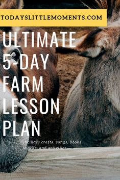 Enjoy this easy farm lesson plan with details on books, crafts, snacks, songs and more! Enjoy a dad-by-day direction on how to complete the activities. Activities For 1 Year Olds, Winter Activities For Kids, Activities To Do, Toddler Activities, Crafts For Kids, Farm Lessons, Winter Kids, 2 Year Olds, Kids Learning